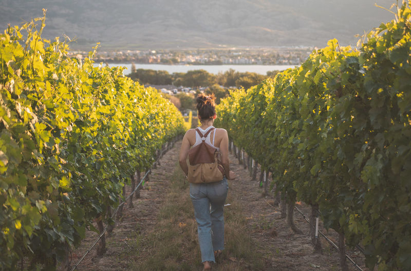 Rear view of woman walking in vineyard