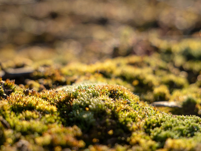 Nature. Selective Focus Moss Growth Close-up No People Plant Beauty In Nature Nature Day Green Color Land Outdoors Sunlight Tranquility Full Frame Rock Freshness Field Textured  Tree Lichen First Eyeem Photo EyeEm 17.62°