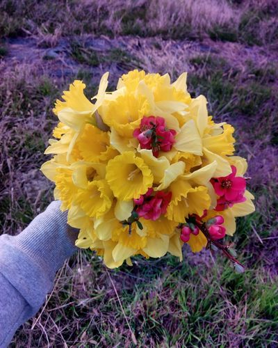 Yellow Flower Human Body Part Human Hand Real People One Person Close-up Outdoors Flower Head Freshness Day Nature People