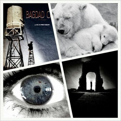 Favourite movie / Favourite animal / Part of me I like best / Picture that I like 4thingsaboutme