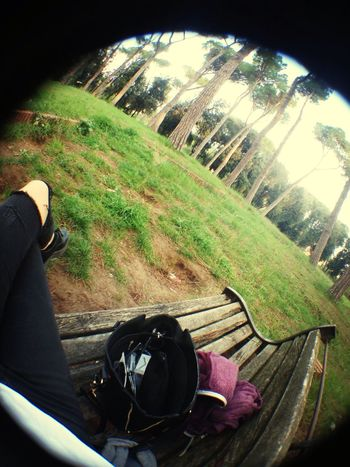 Enjoy Fisheye Walking Around 🌿🍂