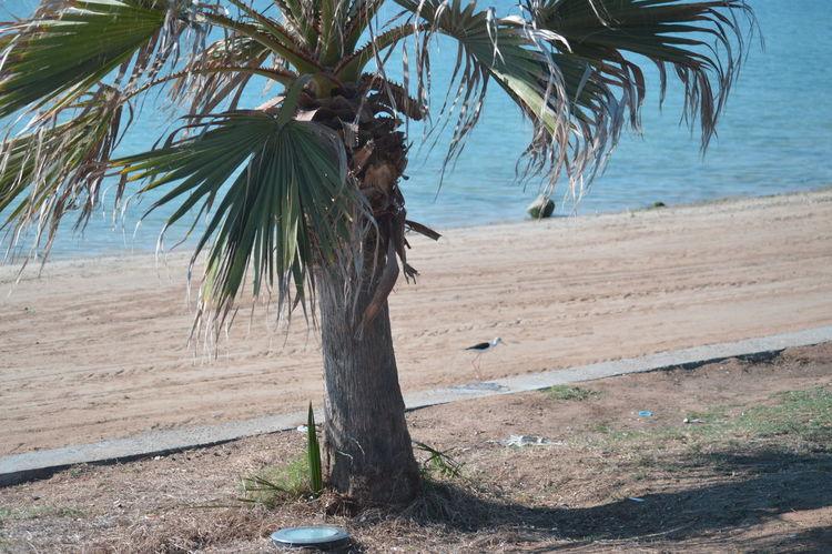 Jeddah_ksa Beautiful City Selective Focus Seaview Bird Photography No People Birds🐦⛅ Jeddah City