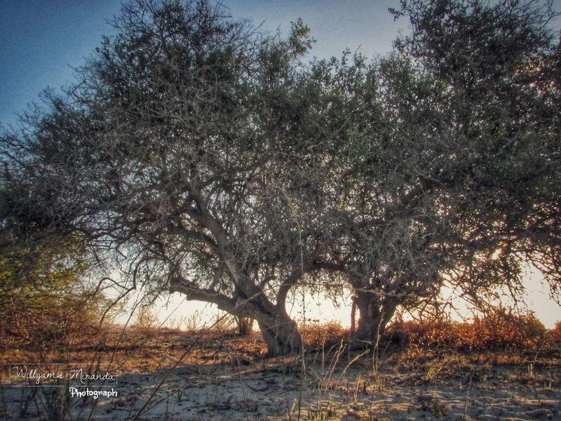 NaturezaBela Ilovephotography