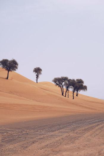 Trees on sand dune in desert against clear sky