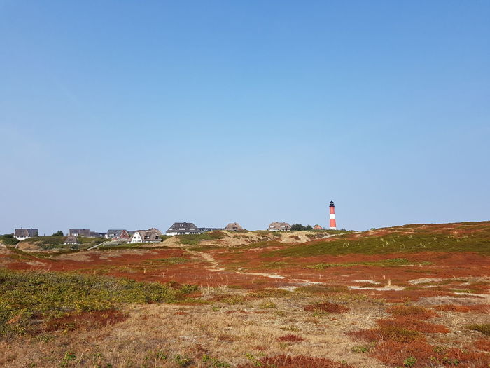 Leuchtturm in Hörnum Heath Heather Summer Sylt, Germany Hörnum-Odde Clear Sky Sand Dune Lighthouse Beach Sea Red Water Sky Horizon Over Water Building Exterior Lookout Tower Countryside Tranquil Scene Calm Idyllic Shore Grassland