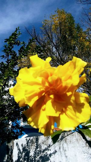 Flower Beauty In Nature Close-up Day Flower Flower Head Fragility Freshness Growth Nature No People Outdoors Petal Plant Sky Tree Yellow