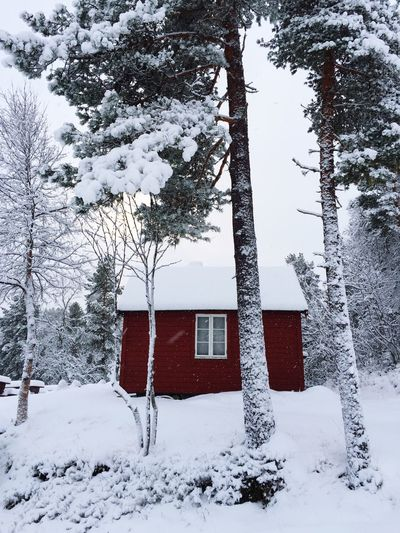 Snow covered houses by trees on field during winter