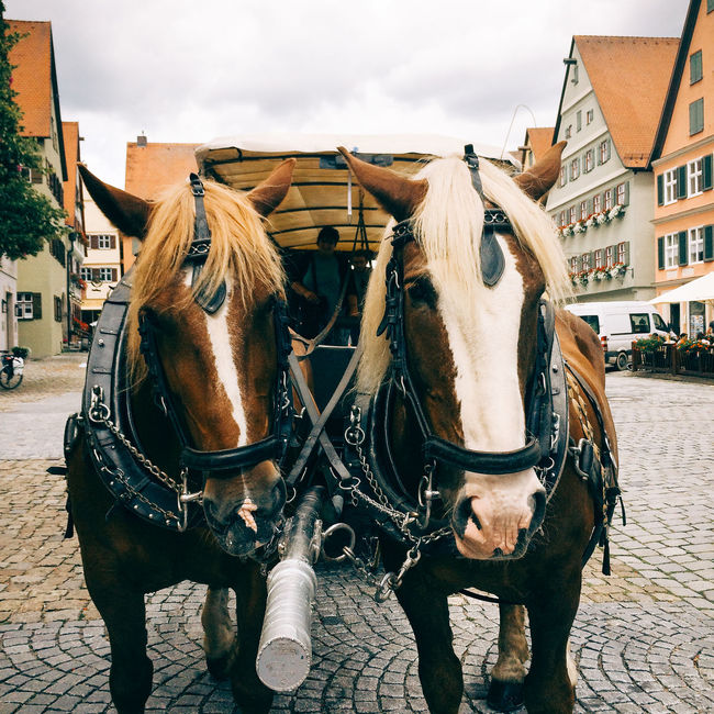 Two horses in front of carriage for tourists in Dinkelsbühl, Germany Animal Animal Head  Animal Themes Bavaria Brown Carriage Carriage Ride Cart Close Up Composition Day Dinkelsbuhl Dinkelsbuhl Franconia German Germany Horse Horses Leisure Activity Mammal No People Perspective Standing Tourism Travel Two Two Horses Wagon