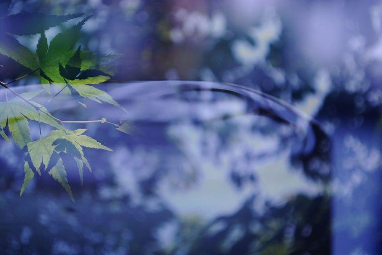 。。 涼。。 Water Water_collection Flower Art Color 多重露光 あっついねー いかがお過ごし?