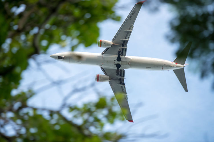 Air Vehicle Low Angle View Flying Sky Airplane Day Mode Of Transportation Nature Tree No People Transportation Mid-air Motion on the move Military Outdoors Plant Focus On Foreground Public Transportation Fighter Plane Aerospace Industry Plane