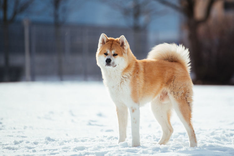 Dog standing on snow