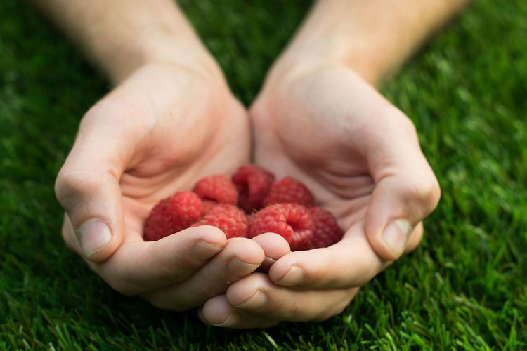 Raspberries Childhood Close-up Day Field Food Food And Drink Freshness Fruit Grass Green Color Growth Healthy Healthy Eating Healthy Lifestyle Holding Human Body Part Human Hand Nature One Person Outdoors People Raspberry Real People Red Investing In Quality Of Life