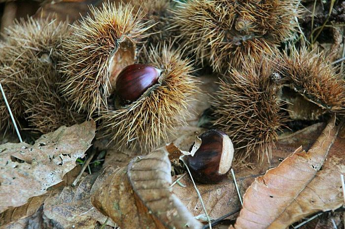 castagne Animal Themes Close-up One Animal Domestic Animals Mammal Animal Wildlife Day No People Outdoors Beauty In Nature Green Nature Green Leaves Focus On Foreground Outdoor Photography Outdoor Pictures Lovefreetime Walking Around Outside Walking Around The City  Walking Around The City  Walking Around The City  Only Mourning Dove Walking Around Taking Pictures Photographic Memory