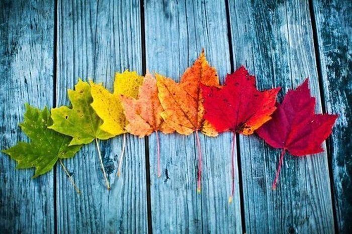 Leafs Autumn Leaves Leaf 🍂 Autumn Leafs
