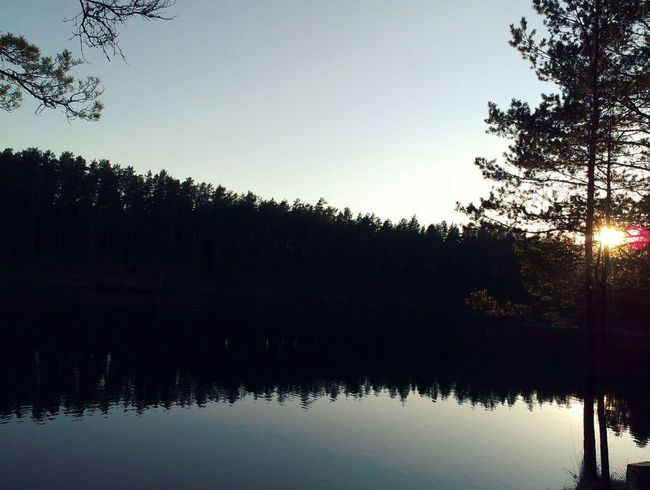 Enjoy The Silence Lake Forest Taking Photos