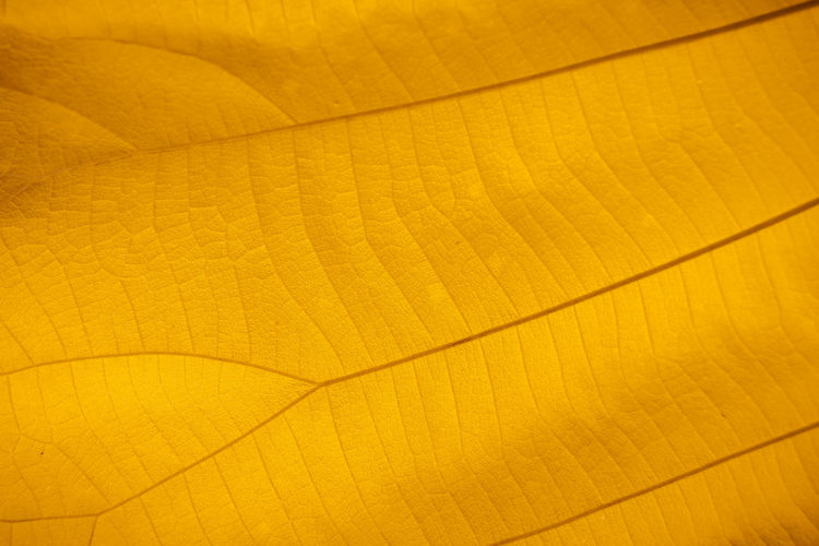 Macro shot. Closeup texture leaf in nature. Backgrounds Yellow Pattern No People Textured  Full Frame Close-up Wood - Material Wood Shape Flooring Abstract Indoors  Design Copy Space Nature Leaf Plant Part Brown Textured Effect Wood Grain Leaf Texture Nature Orange Color Macro Macro Shot