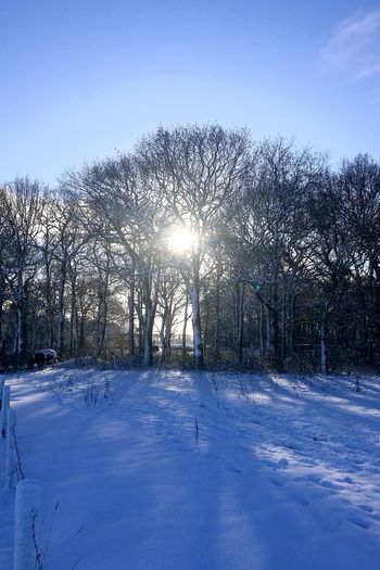 Winter Snow Cold Temperature Outdoors Day Frozen Blue Nature No People Tree Beauty In Nature Sky