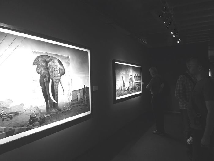 Amazing exhibition of Nick Brandt! Exhibition Art Photography