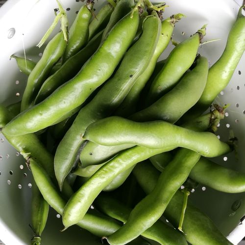 Green Color Healthy Eating Food Vegetable Food And Drink Freshness No People Indoors  Healthy Lifestyle Vegetarian Food Close-up Ready-to-eat Day Lima-beans