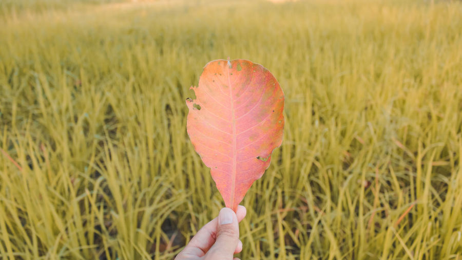 Person holding leaf in field
