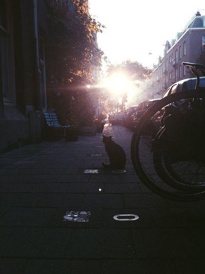 My street in