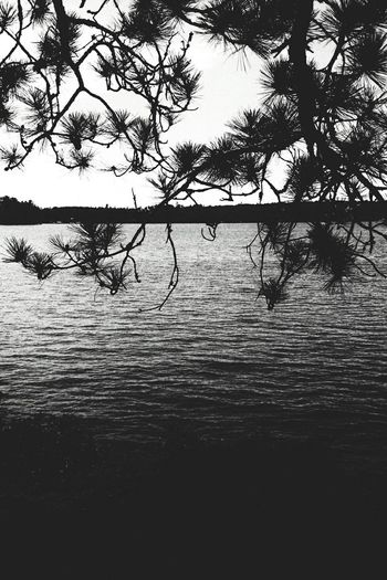 Water Tree Lake Nature No People Beauty In Nature Outdoors Sky Scenics Tranquility Branch Day Branches And Sky Pine Needles Blackandwhite Minnesota Northern Minnesota North Woods  Cabin In The Woods Up North Silhouette Silhouette_collection Tree And Sky Pine EyeEm Nature Lover