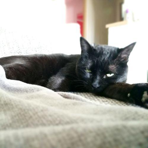Blackcats Pets Dontlikehumans