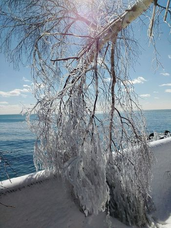 Frozen tree on Lake Ontario. Frozen Frozen Nature Frozen Tree Lake Lake Ontario Frozen Landscape  Lake View Lakeshore Frozen In Time Ice Great Lakes Canada Canada Coast To Coast Toronto Ontario Toronto Islands Getting Inspired Eye4photography  EyeEm Best Shots Landscapes With WhiteWall EyeEm Gallery View Frosty Trees Sky And Clouds Water_collection