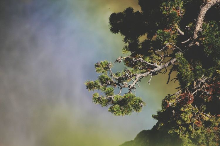rainbowheart Pinaceae Pine Tree Beauty In Nature Outdoors Nature Tree Needle - Plant Part No People Traveltime Travel Photography Travel Rainbow Colors Water Waterfalls Waterphotography Tricolour Colours Of Nature Forest Green Woods