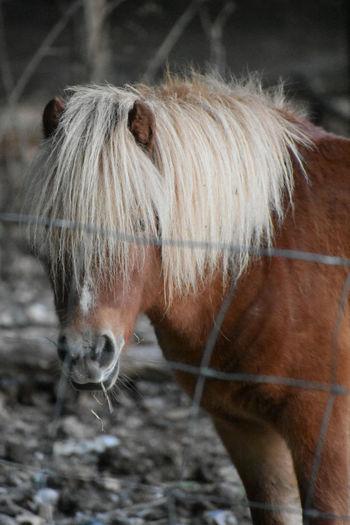 Horse in a sunlight