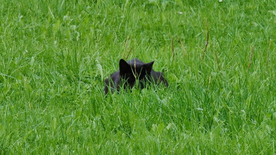 Cat hiding in
