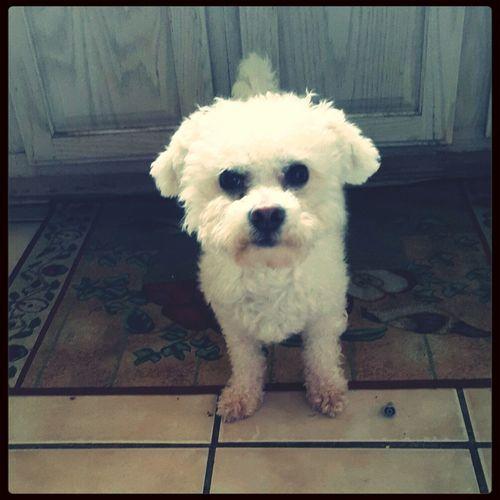 """Hi, mama!"". My silly little one ♡ First Eyeem Photo I Love My Dog Hello World"