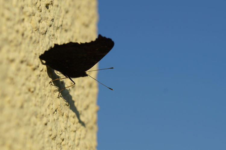 Low angle view of insect on blue against clear sky