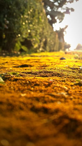 I M o s s Y o u Moss Summercolors Summer Summerlove Sunsetphotographs Grass Groundlevel Nicewalk Stroll Oranges