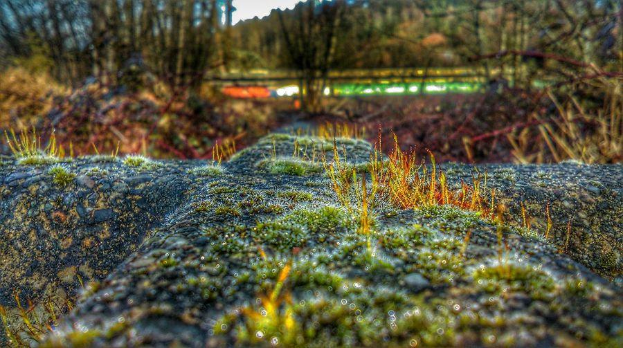 Washington State No People Horizontal Close-up Moss Mossy Stone Colorsplash Wintertime Bushes Vibrant Focused Beatiful Green Winter Plants Calm Freezingforart Kent,wa USA EyeEmNewHere