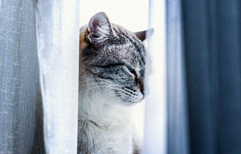 Pets Window One