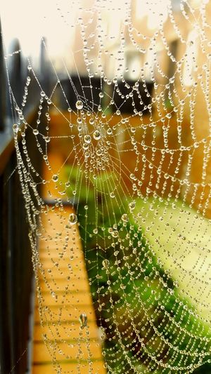 The smallest of things can create something beautiful... Drop Water Transparent Wet Window No People Spider Web Close-up Nature Rain Droplet Backgrounds RainDrop Web Day First Eyeem Photo Outdoors Nature Rainy Season