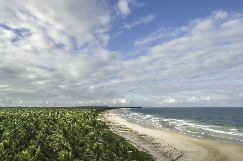 Be. Ready. Brazil Cloud Coconut Perspectives On Nature Piracanga Beach Ecovillage Landscape Outdoors
