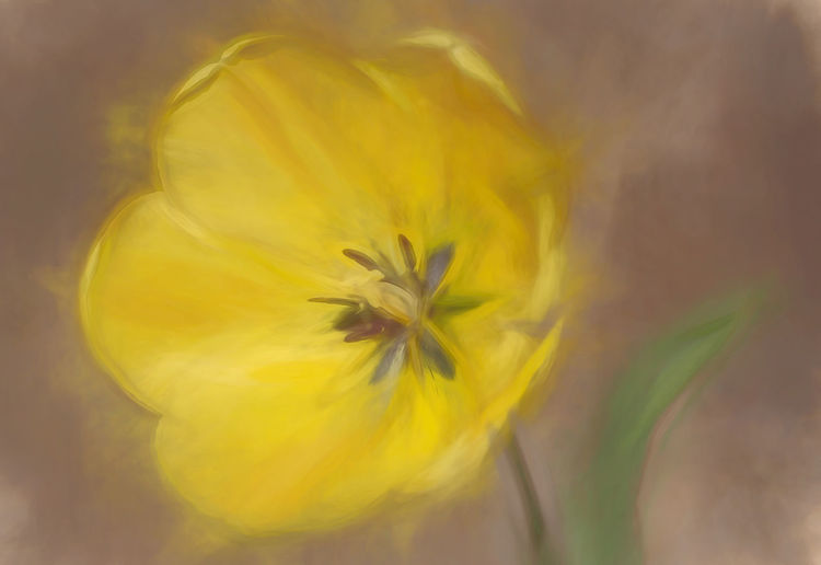 A beautiful flower done in the abstract. Yellow Flower Flowering Plant Freshness Fragility Beauty In Nature Flower Head Outdoors Soft Focus Vulnerability  Plant Petal Nature Beauty Abstract Beauty In Nature Decorative Colorful Floral Blossom Blooming