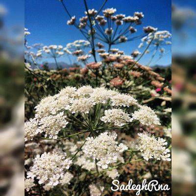 👌 Lalehzar is a village in Lalehzar Rural District, Lalehzar District, Bardsir County, Kerman Province, Iran 🌸 صنعت گلاب_گیری منطقهلاله_زارمدیون زندهیاد شهین_دخت صنعتی است 👸 هزاران هکتار باغ گلبا وجود خشکی هوا درشهرستانبردسیر، در ارتفاع 2700متری منطقهلالهزار گل_محمدی بدست میآید 🌿 درواقع لالهزار مرتفعترین منطقه استان کرمان است و به مرتفعترین منطقه ایران که سکونت در آن همچنان وجود دارد 😱 ⚡ مختصات جغرافیایی 56 درجه و 50 دقیقه طول شرقی و 29 درجه و 30 دقیقه عرض شمالی در 75 کیلومتری جنوب شرق شهر بردسیر قرار دارد 🌍 SadeghRna Thursday, June 4 2015 😏 Mustseeiran Iranemoon Iranteravel ماباهمیم ایران_را_باید_دید Ig_kerman Mustseekerman @ig_kerman + @mustseeiran_insta + @mustseekerman