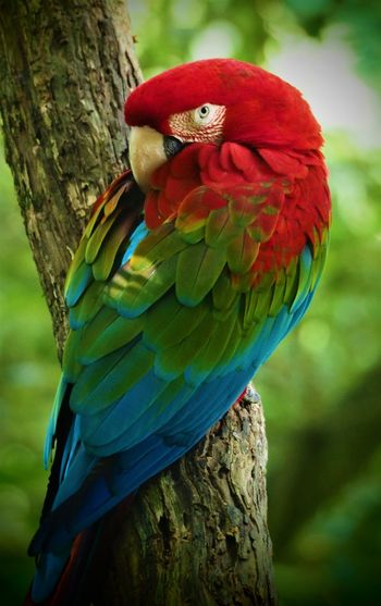 Ritchie Macaw, Greenwing macaw, Birds of Eden Animal Animal Themes Animal Wildlife Animals In The Wild Bird Close-up Day Focus On Foreground Greenwing Macaw Macaw Nature No People One Animal Outdoors Parrot Perching Plant Scarlet Macaw Tree Tree Trunk Trunk Vertebrate