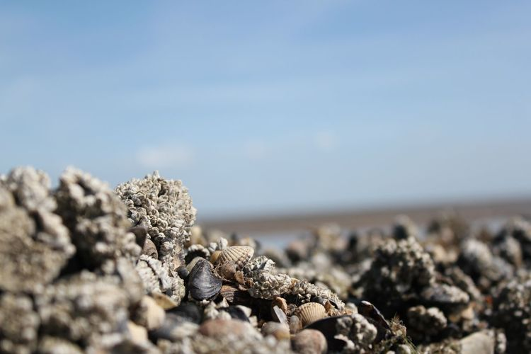 Stone & Shells. Nordsee Beauty In Nature Blue Sky Close-up Day Eyem Gallery Nature No People Nordsee Outdoors Pebble Pellworm Rock Rock - Object Shells Shore Stone Stone - Object The KIOMI Collection The Week Of Eyeem Tranquil Scene Tranquility The Essence Of Summer- 2016 EyeEm Awards The Essence Of Summer The Great Outdoors - 2017 EyeEm Awards