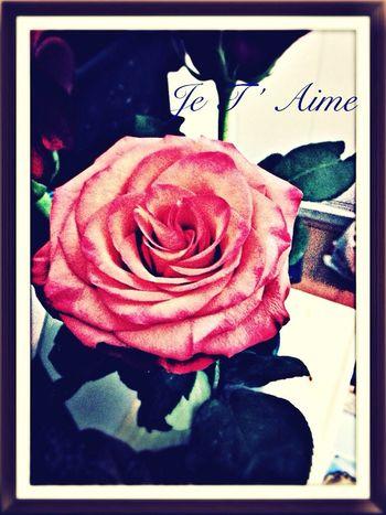 La Rose de Mon Amour !