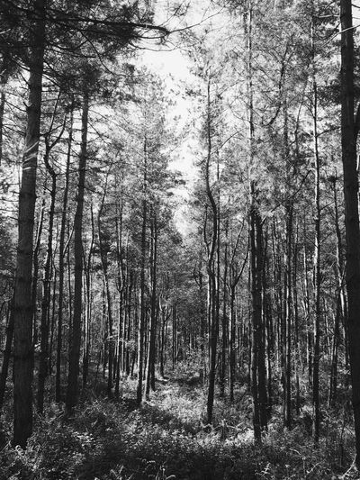 Tree Forest Nature WoodLand Non-urban Scene Outdoors No People Day Blackandwhite Black And White Trees England U.K. Europe First Eyeem Photo