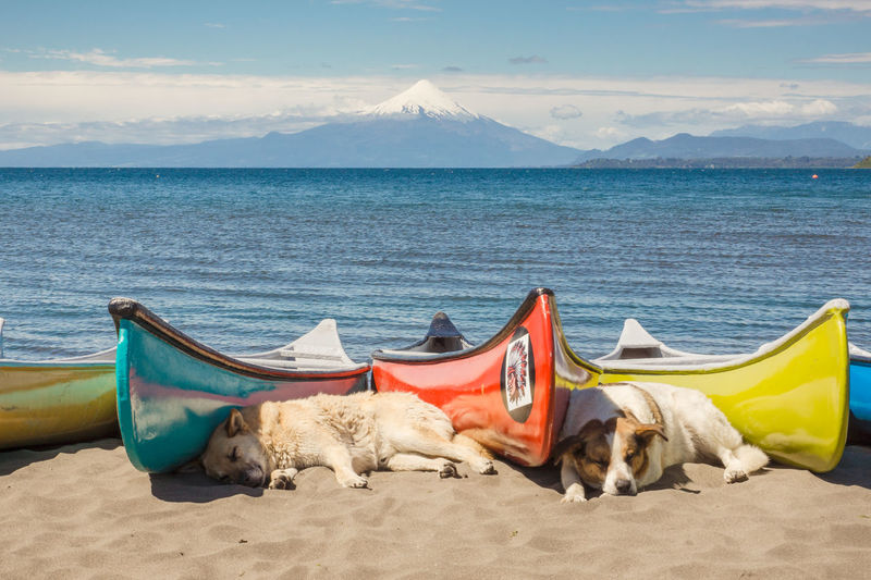 Stray dogs sleeping by boats on sand at lake llanquihue against sky
