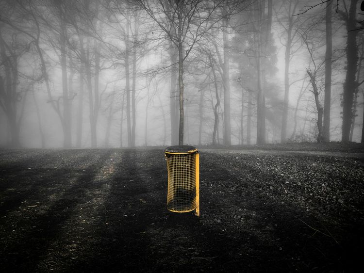 Showcase: December Schweiz Switzerland Zürich Zurich, Switzerland Eyem Misty Day Misty Mist Foggy Weather Foggy Fog Foggy Day Forest In The Forest Nature Nature_collection EyeEm Nature Lover Naturelovers Yellow Garbage Garbage Can Trees Tree_collection  Tree My Best Photo 2015