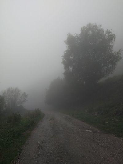 Road Tree Fog Dawn Water Winter Forest Cold Temperature Tree Area Rural Scene Smog Rainy Season