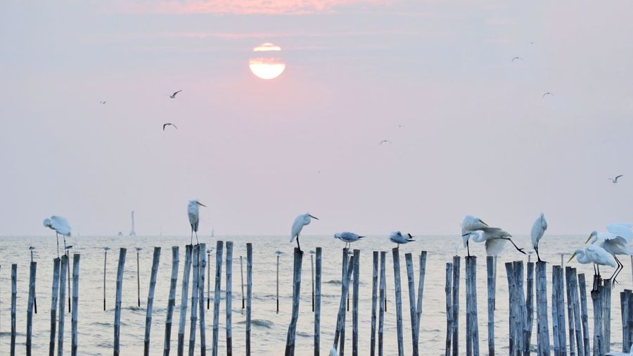 Seagull perching on wooden post against sky during sunset