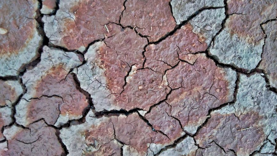 Backgrounds Full Frame Textured  Arid Climate Cracked Pattern Close-up Rough Rugged Arid Bad Condition Peeling Off Plant Bark Weathered Bark Natural Pattern Tree Ring