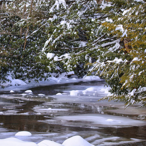 River flowing by trees during winter